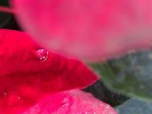 在红色叶子的一水下落 库存图片