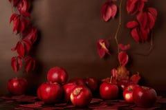 在红色和伯根地树荫的秋天单色静物画 库存照片