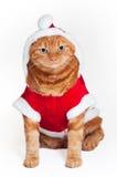 在红色和空白圣诞老人成套装备的橙色猫 免版税图库摄影