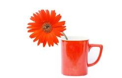 在红色咖啡杯的红色大丁草花 免版税库存图片