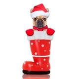 在红色圣诞老人启动的圣诞节狗 库存图片