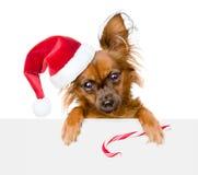 在红色圣诞老人帽子的微小的小狗有圣诞节偷看fr的棒棒糖的 免版税库存图片