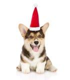 在红色圣诞老人帽子的愉快的彭布罗克角威尔士小狗小狗 查出在白色 免版税库存照片