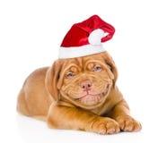 在红色圣诞老人帽子的愉快的微笑的红葡萄酒小狗 查出在白色 库存照片
