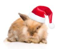 在红色圣诞老人帽子的逗人喜爱的兔子 背景查出的白色 图库摄影