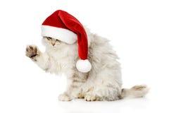 在红色圣诞老人盖帽的圣诞节猫 笤帚查出的白色 图库摄影