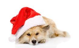 在红色圣诞节圣诞老人帽子的哀伤的狗,隔绝在白色背景 免版税库存照片