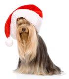 在红色圣诞节圣诞老人帽子的约克夏狗 在白色 库存照片