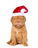在红色圣诞节帽子的哀伤的小狗 背景查出的白色 免版税图库摄影