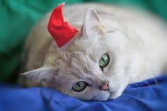 在红色圣诞节帽子的大银色英国猫疲倦了于奔忙的新年假日,他今天是圣诞老人,生动的 免版税库存照片