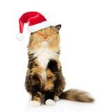 在红色圣诞节帽子的愉快的猫 背景查出的白色 免版税库存照片