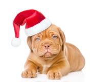 在红色圣诞节帽子的愉快的红葡萄酒小狗 查出在白色 免版税库存照片