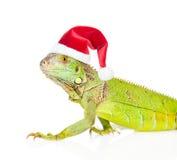 在红色圣诞节帽子的特写镜头绿色蜥蜴 查出在白色 库存图片