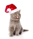 在红色圣诞节帽子的被舔的小猫 背景查出的白色 库存照片