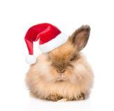在红色圣诞节帽子的逗人喜爱的兔子 背景查出的白色 图库摄影