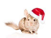在红色圣诞节帽子的黄鼠 背景查出的白色 免版税库存照片