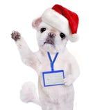 在红色圣诞节帽子穿戴空白白色徽章大模型的狗 免版税库存照片
