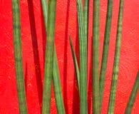 在红色墙壁上的植物茎 免版税库存照片