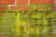 在红色墙壁上的绿色青苔 免版税库存图片