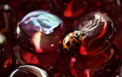 在红色小珠的臭虫 免版税库存图片