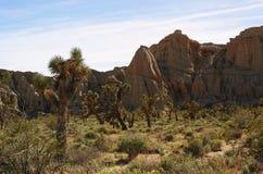 在红色岩石峡谷的约书亚树 免版税库存图片