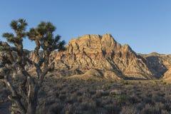在红色岩石峡谷iin内华达的Mt威尔逊黎明 图库摄影