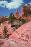 在红色峡谷的小河 免版税图库摄影