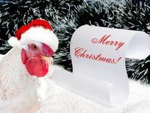 在红色帽子圣诞老人` s的白色公鸡 免版税图库摄影