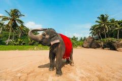 在红色斗篷盖的愉快和滑稽的大象站立在海滩 免版税图库摄影