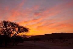 在红色日出结构树的deset 库存图片