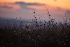 在红色晚上日落的背景的草 免版税库存照片