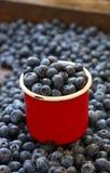 在红色杯子关闭的新鲜的成熟蓝莓 库存图片