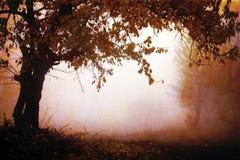 在红色样式的秋天风景 免版税图库摄影