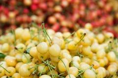 在红色樱桃背景的鲜美成熟白色樱桃  库存图片