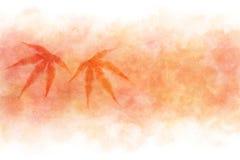 在红色水彩油漆背景的日本秋天枫叶摘要 免版税图库摄影