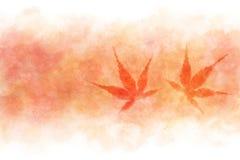 在红色水彩油漆背景的日本秋天枫叶摘要 免版税库存图片