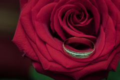 在红色玫瑰的婚戒作为爱的标志 图库摄影