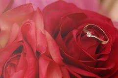 在红色玫瑰的婚戒 库存图片