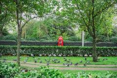 在红色电话亭附近的鸽子在公园 图库摄影