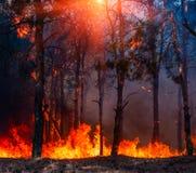 在红色的森林火灾,野火燃烧的树和橘黄色 免版税图库摄影