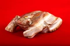 在红色的石牛蛙 免版税库存图片