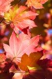 在红色的秋天 免版税库存照片