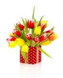 在红色短上衣小点礼物盒的美丽的郁金香 免版税库存照片