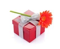 在红色礼物盒的橙色大丁草花 库存照片