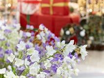 在红色礼物b背景的美丽的紫罗兰色和白花  库存照片