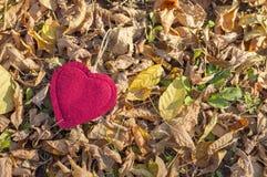 在红色秋叶中的红色心脏在下落的叶子 图库摄影