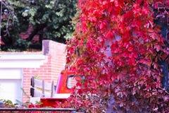 在红色秋天叶子中间的红色卡车 图库摄影