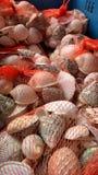 在红色网的贝壳 库存照片