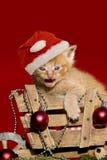 在红色背景的圣诞节小猫 免版税库存照片