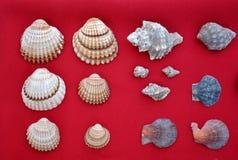 在红色背景的壳 免版税库存图片